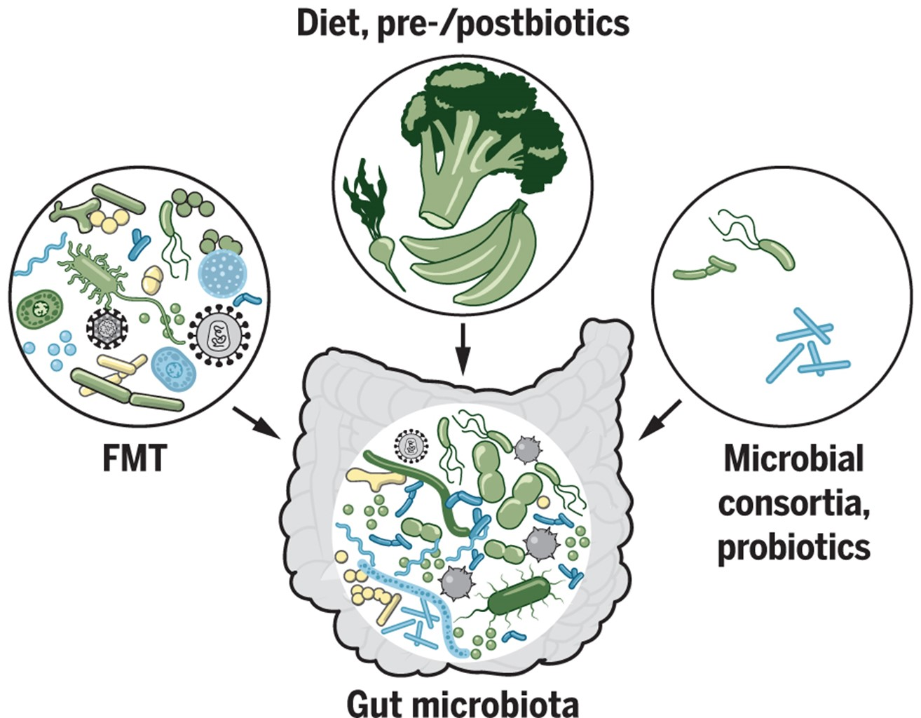 Come si fa a modificare il microbiota intestinale?